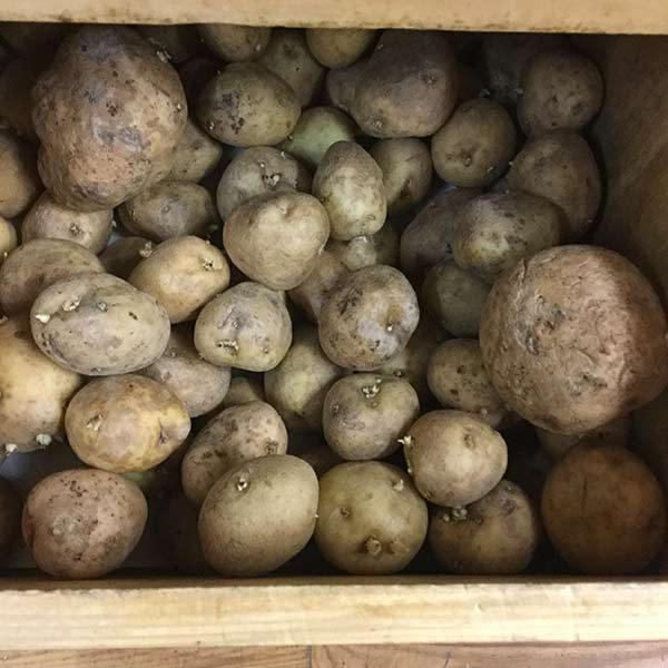 Potatoes, Gold - 3 lbs