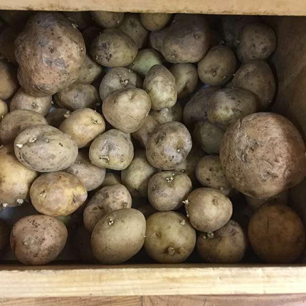 Potatoes, Gold - 3 lbs