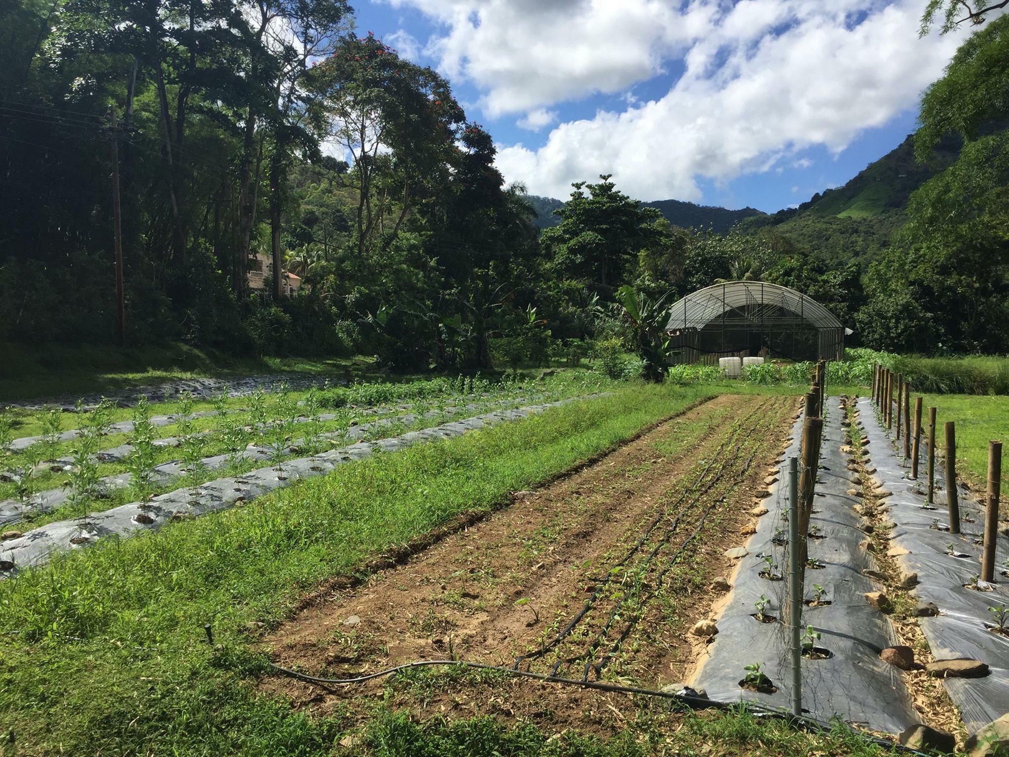 Coop Organica Madre Tierra