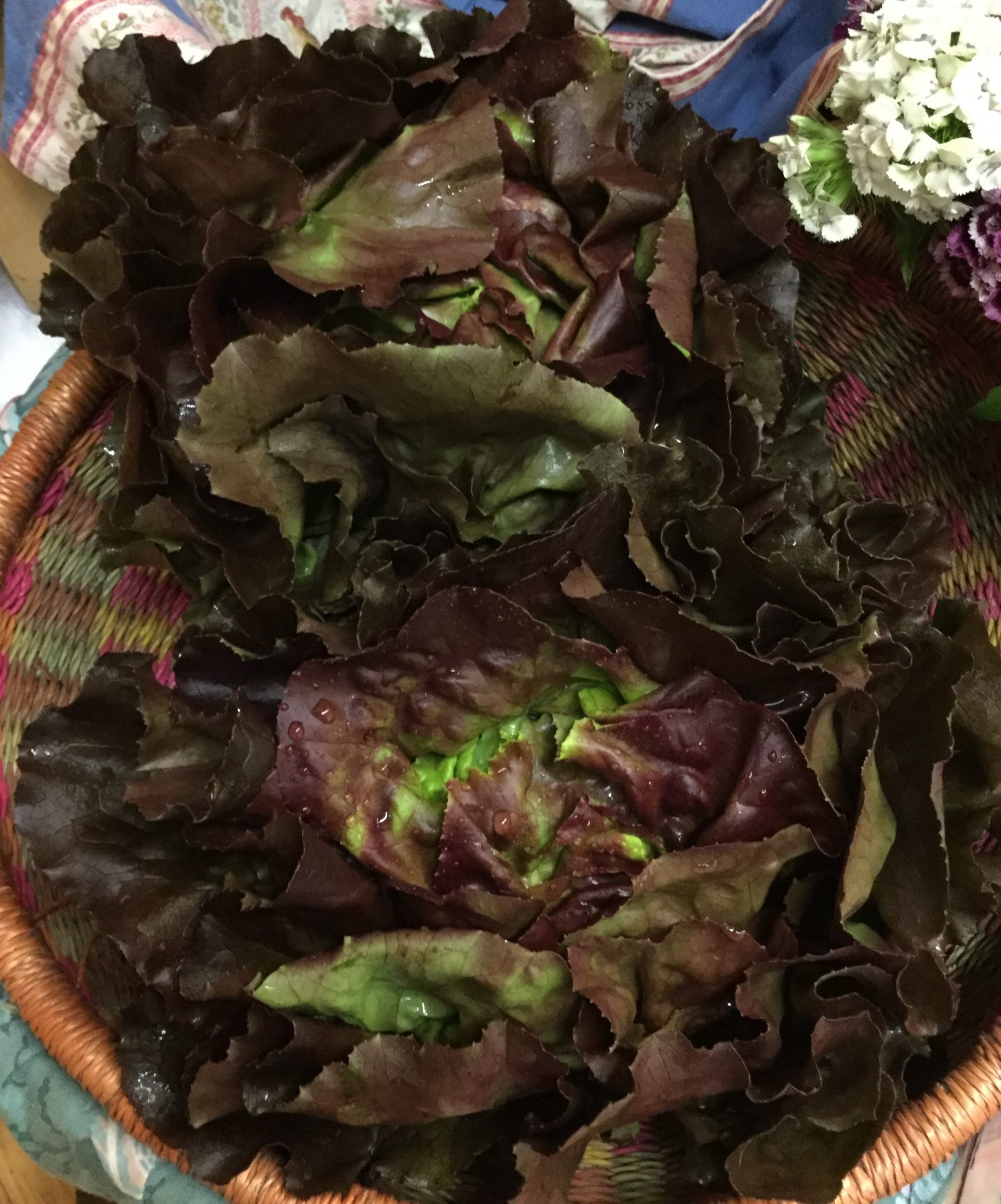 LOCAL Organic Red Butterhead Lettuce