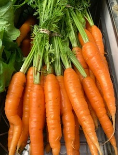 LOCAL Organic Carrot Bunches