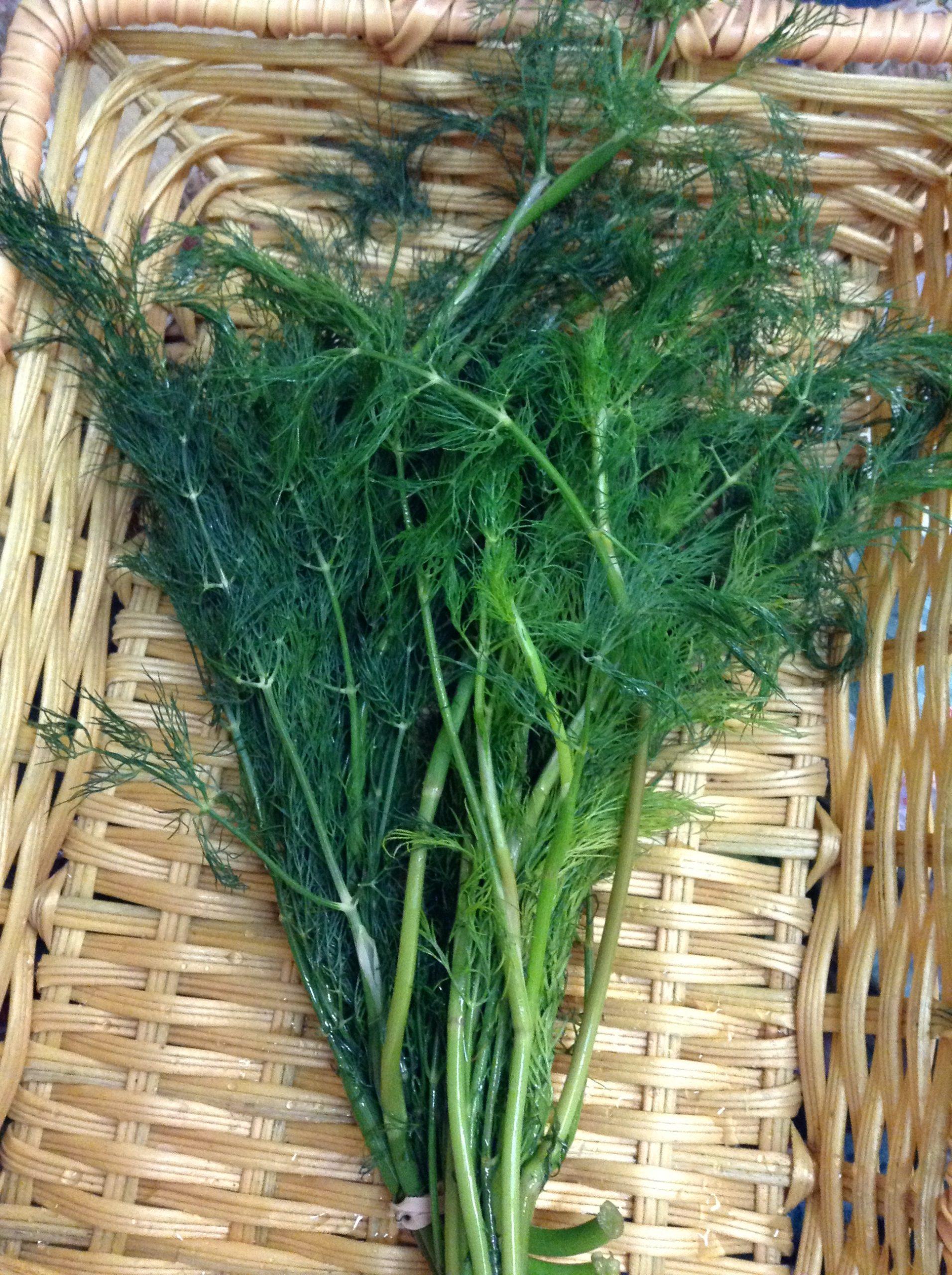 Organic Dill