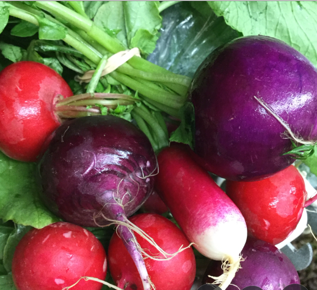LOCAL Organic Radishes in bunches